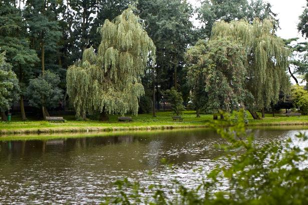 Staw na terenie Parku Belzackiego